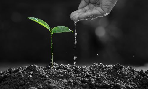 Driving sustainability - shoot growth